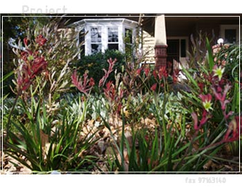 Native and drought tollerant exotic plants, recycled red bricks