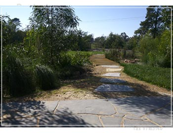 Natural drainage swale (or dry creek) within this native garden